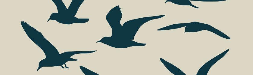 pochoir mural avec des oiseaux